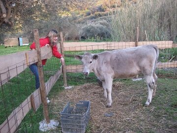 Lefkogia Farm animal feeding