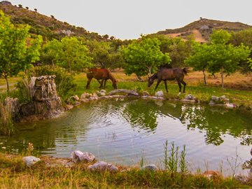 Lefkogia Farm pond with horses